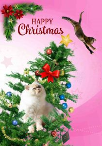 Mabel in the Tree – Christmas Card by Luke McEwen